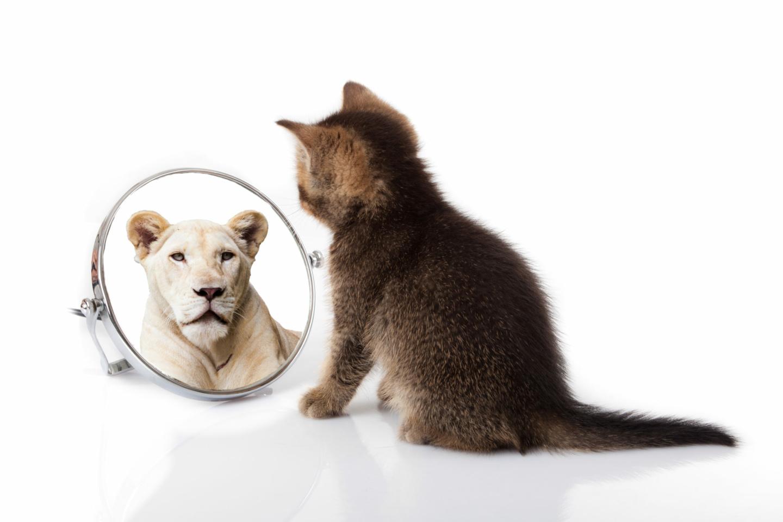 Persönlichkeitsentwicklung: Eine Katze schaut in den Spiegel aus dem ein Löwe zurück blickt