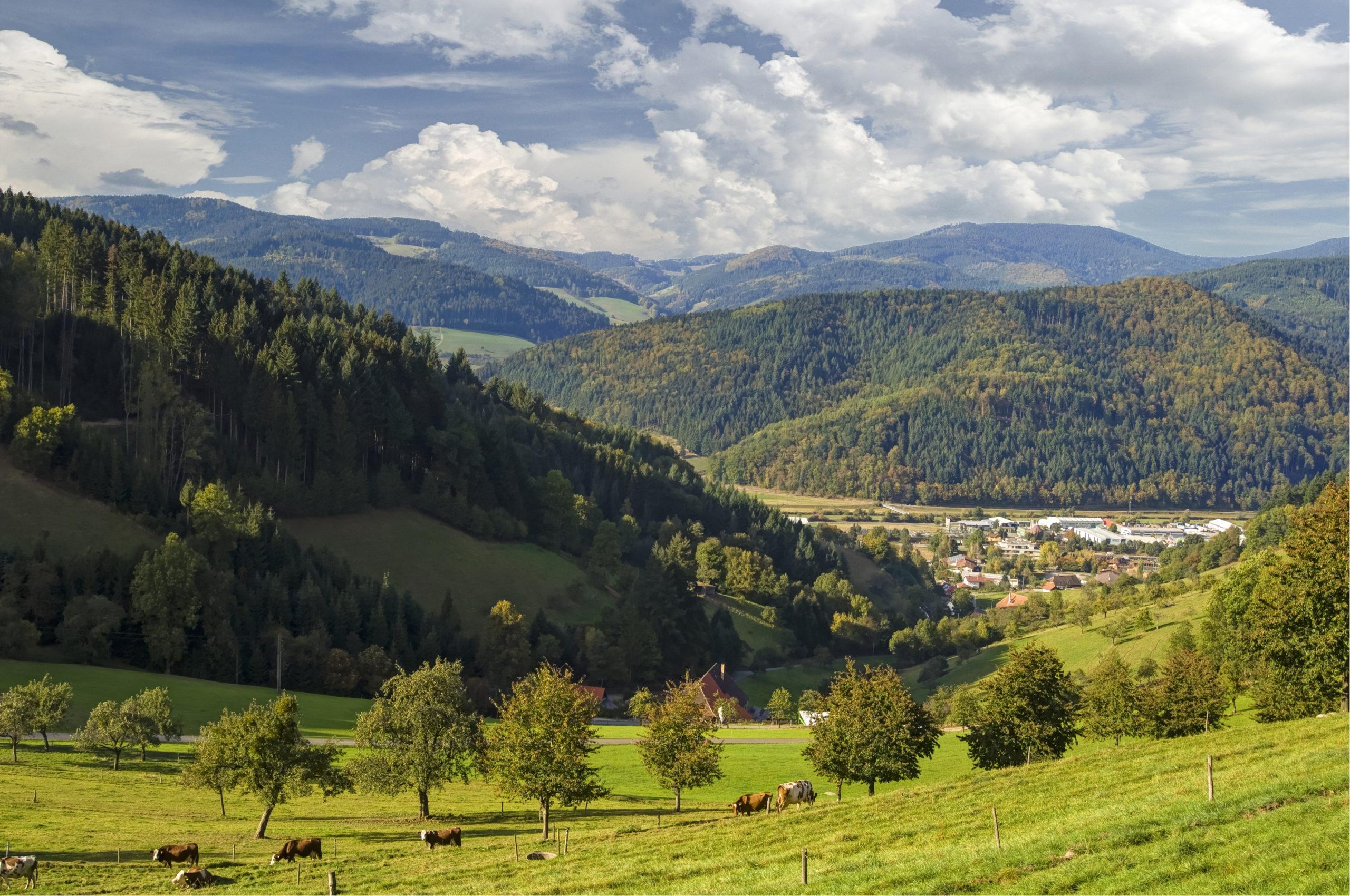 Sommerurlaub in Süddeutschland: Kienzigtal