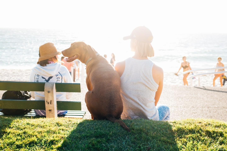 Richtiger Sonnenschutz: Eine Frau sitzt neben ihrem Hund auf einer Mauer und schaut auf eine Strandpromenade.. Vor ihr sitzt eine Frau auf der Bank, Menschen kommen vom Strand auf die Promenade