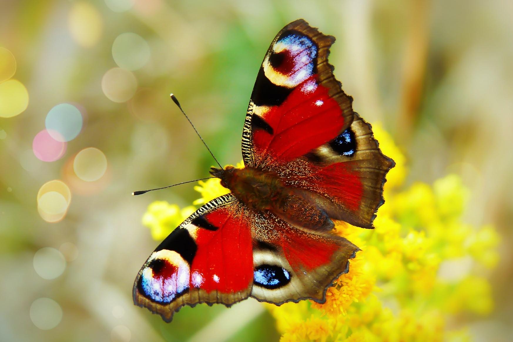 Cocooning: Schmetterling auf gelber Blüte