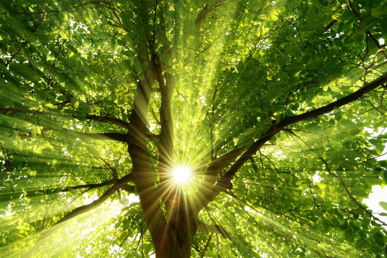 Gegen Stress helfen Ruhepausen: Sonne strahlt explosiv durch den Baum