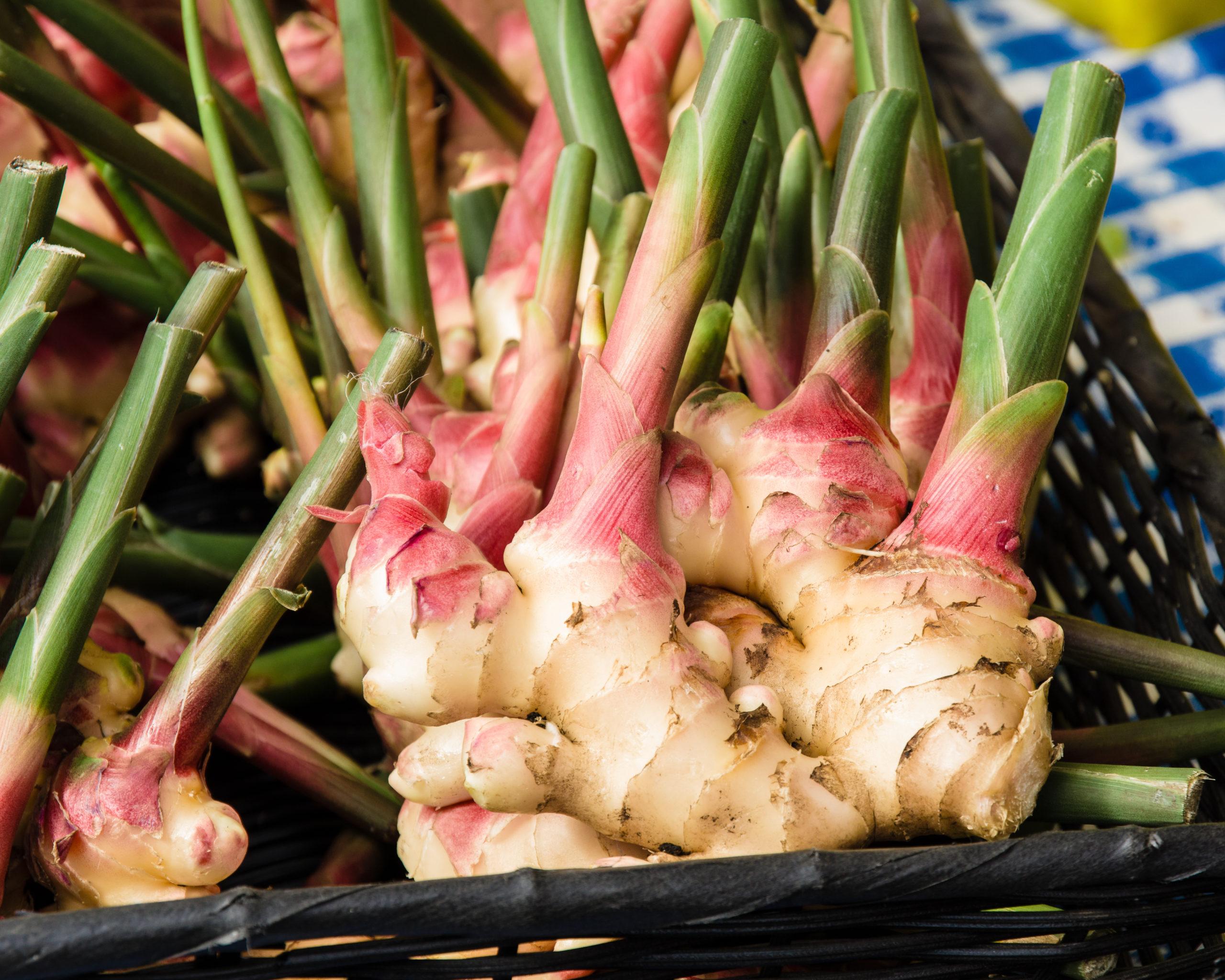 Superfood: Frische Ingwerwurzel auf einem Marktstand