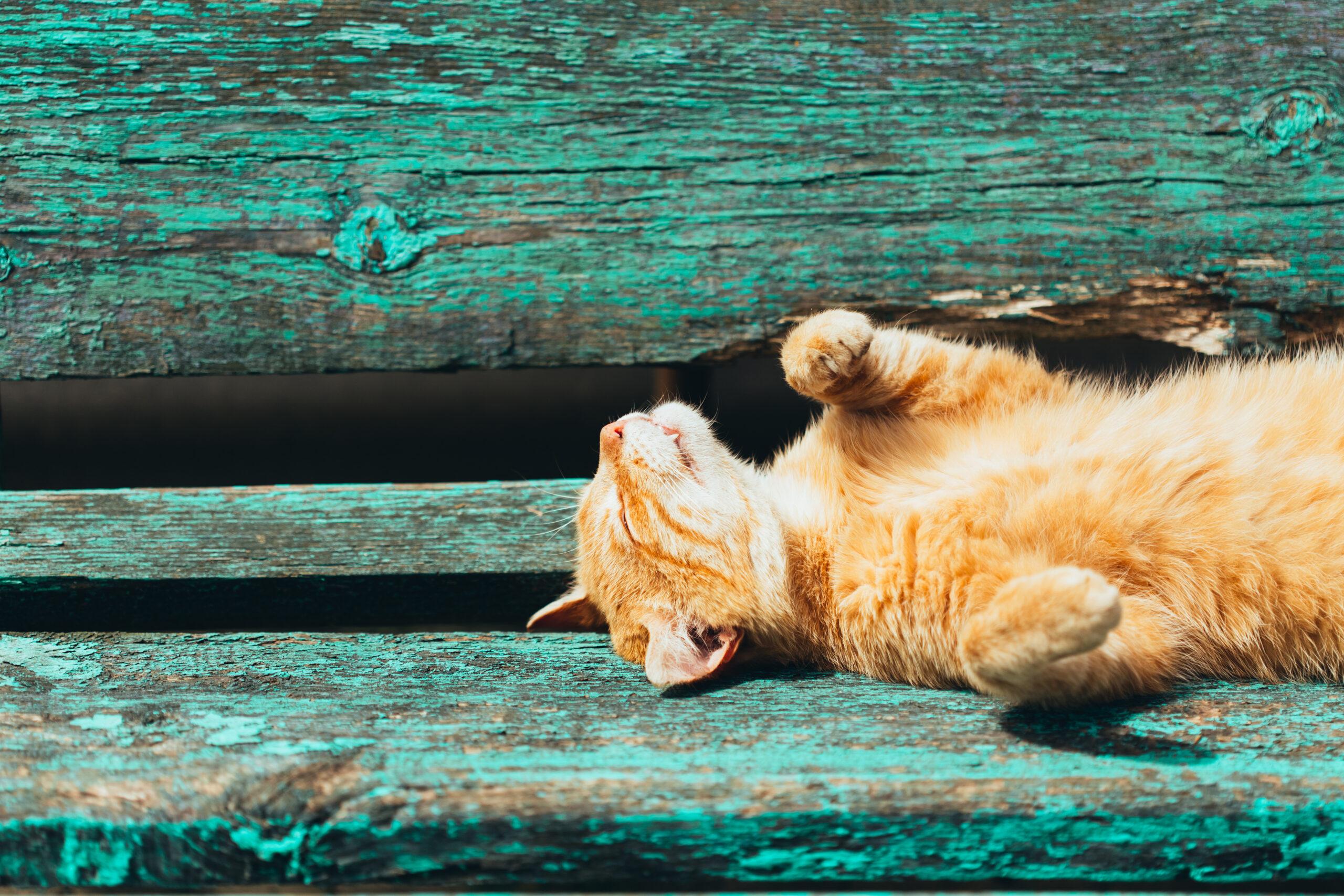 Frühlingssonne: Ein Katze liegt auf einer Bank und reckt sich in die Sonne