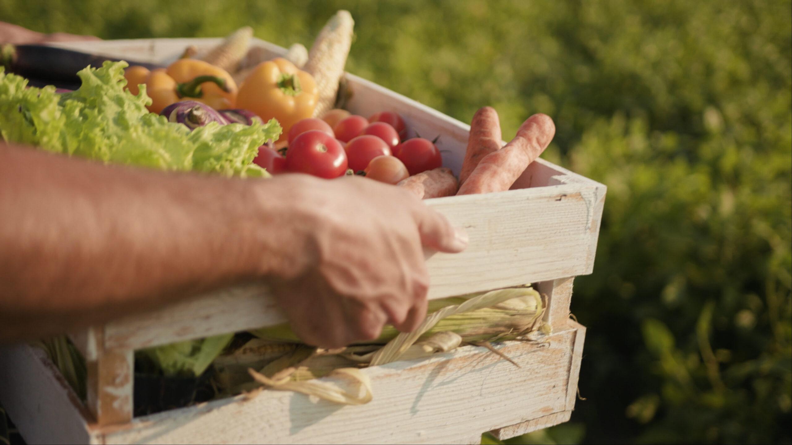 Slow Food: Ein Mann trägt eine Holzkiste mit frischem Gemüse und Salat.
