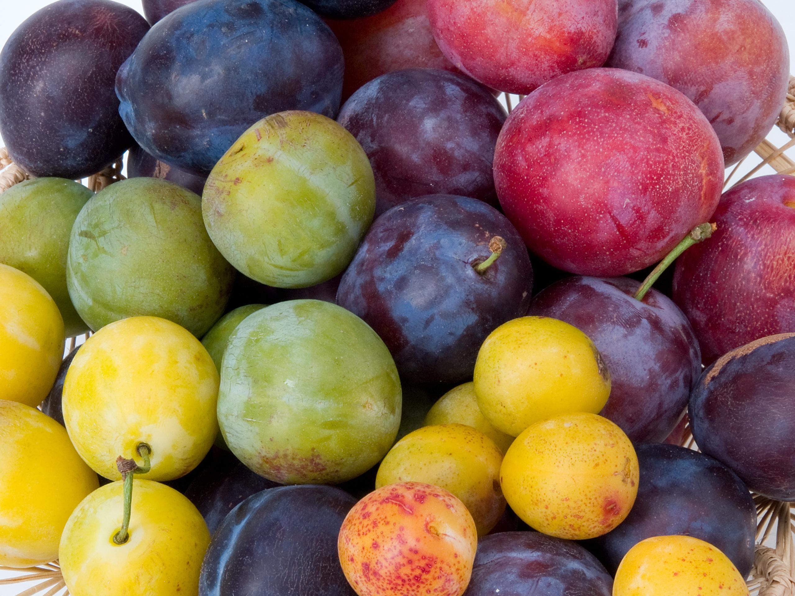Vitamine für den Herbst: verschiedene Pflaumensorten